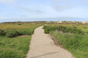 Accessible Pathway Heading Towards Ocean